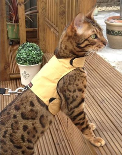 Mynwood Cat Jackets Walking Harness Vest