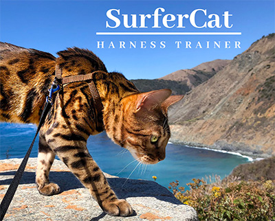 Surfer Cat Mav Escape-Proof Harness Trainer