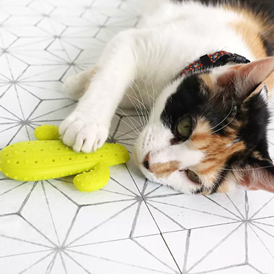 Pet Zone Quirky Kitty Boredom Busterz Cactus Dental Cat Toy